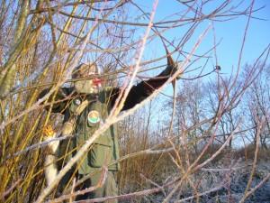 Archer tir nature 2d