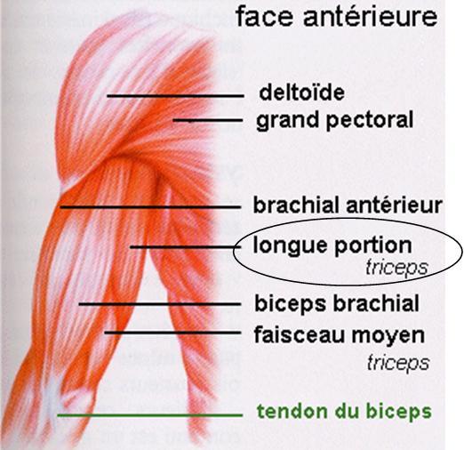 Face Antérieur